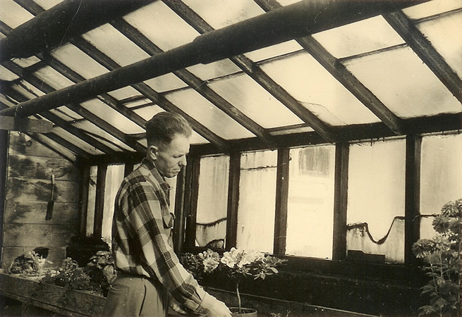Lyle Willson working in original greenhouse in 1940's