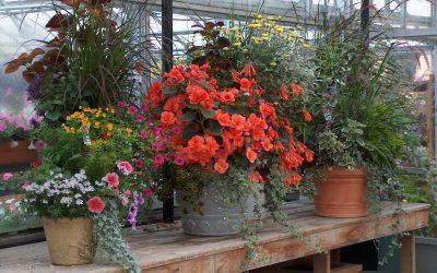Greenhouses 2008 0721 (2)